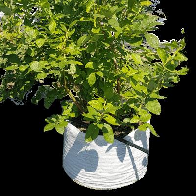 Slika biljke u vreći od agrotekstila